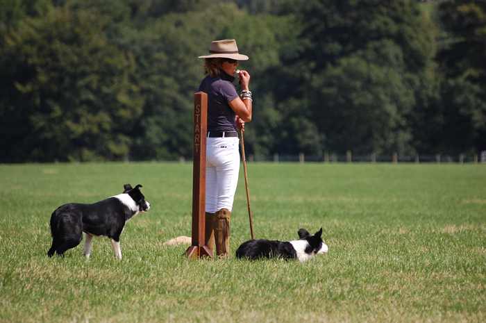 Katy Cropper Sheepdog Handling